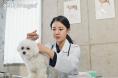 세계 1호 코로나19 감염 동물치료제 국내서 도전